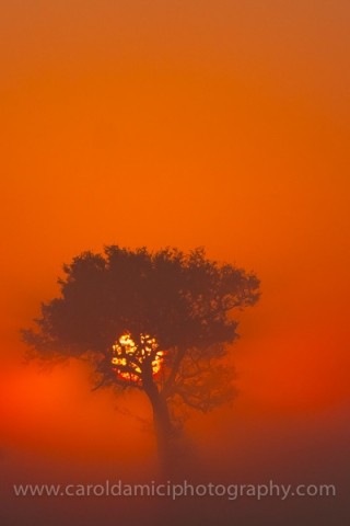 Red Dawn over African plains