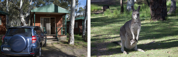 Cedar cabin and native wildlife at Mt Kosciuszko retreat