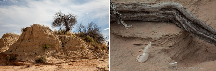 Ancient lake beds and fossil remains in Mungo NP