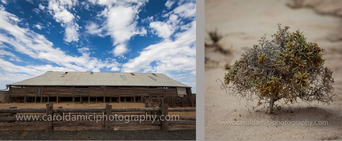 Shearing shed and example of the vegetation